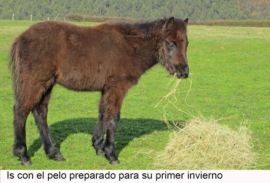 Is-ponie