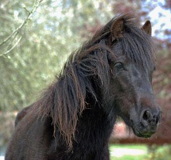 como-son-los-caballos